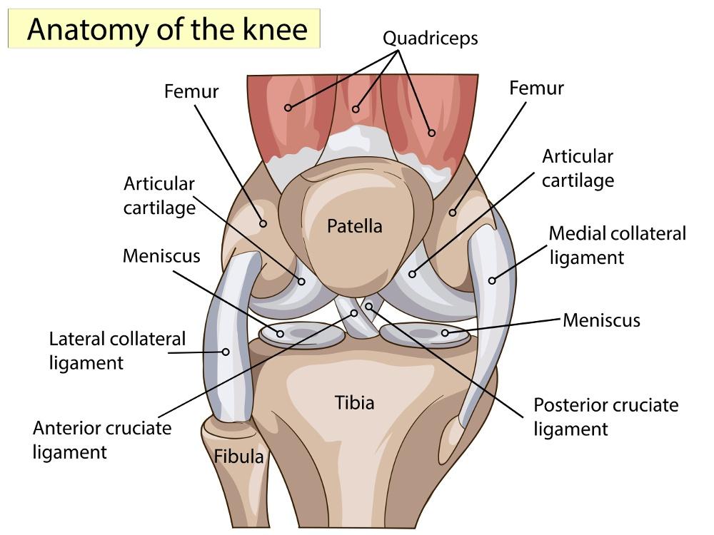 protesi ginocchio anatomia