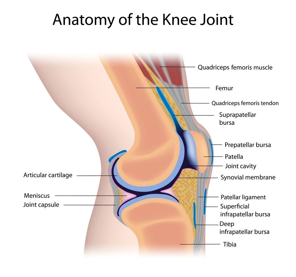 artrosi articolazione