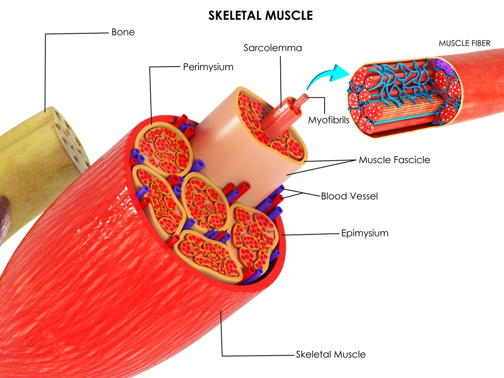 strappo muscolare cause